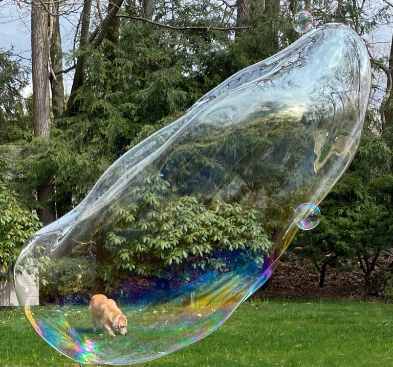 Dog in bubble 4.2.2020